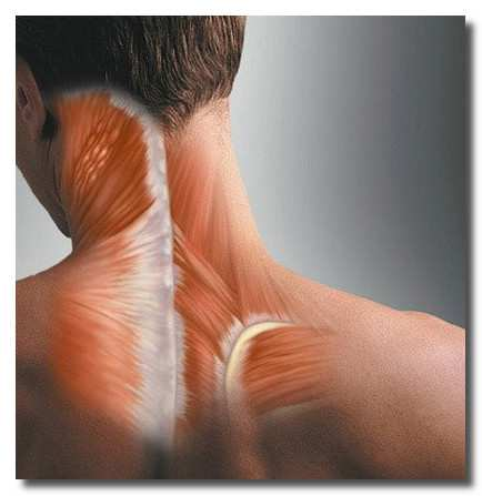 Нервные спазмы, что делать при спазмах на нервной почве?